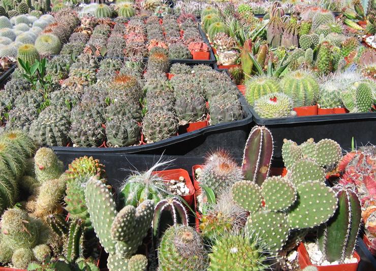 California Nursery Specialties Cactus Ranch Cacti And